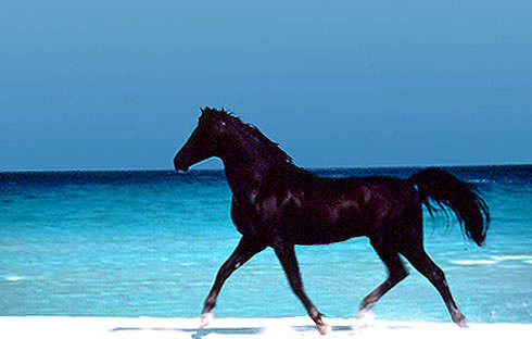 horse stomping man