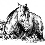 Black Stallion Racing Son