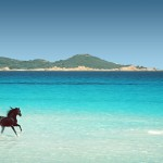 The Black in Sardinia