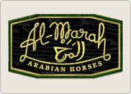 Visit Al-Marah Arabian Horses