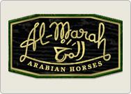 Visit Al-Marah Arabian Horses