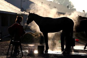 yunnan baiyao for horses