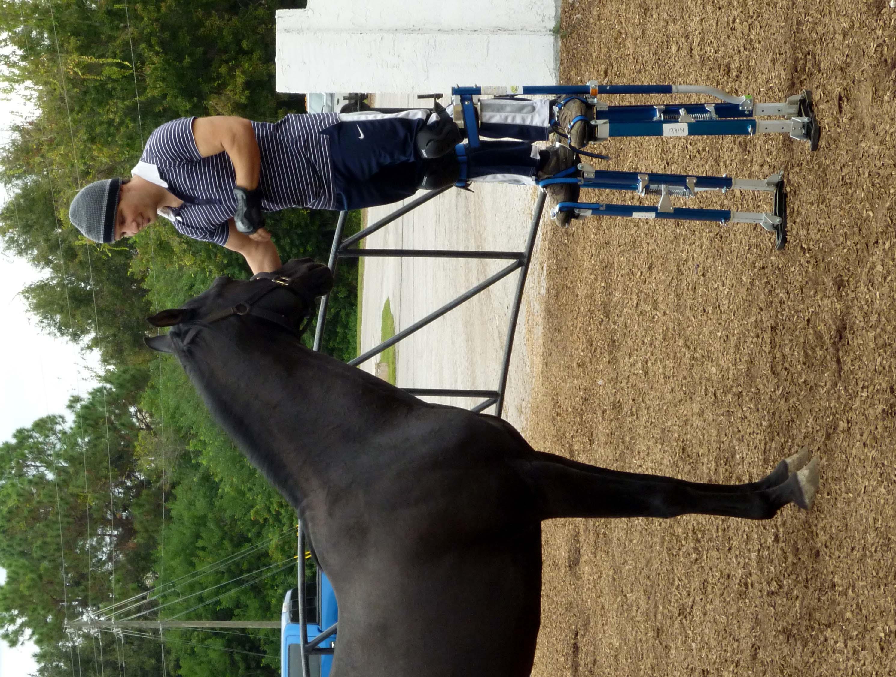 black a horse has - photo #30