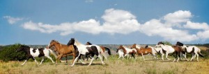 dayton horses