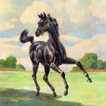 Son of Black Stallion 1947