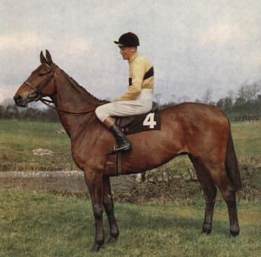 rkle (19 April 1957 - 31 May 1970) was a famous Irish Thoroughbred racehorse.