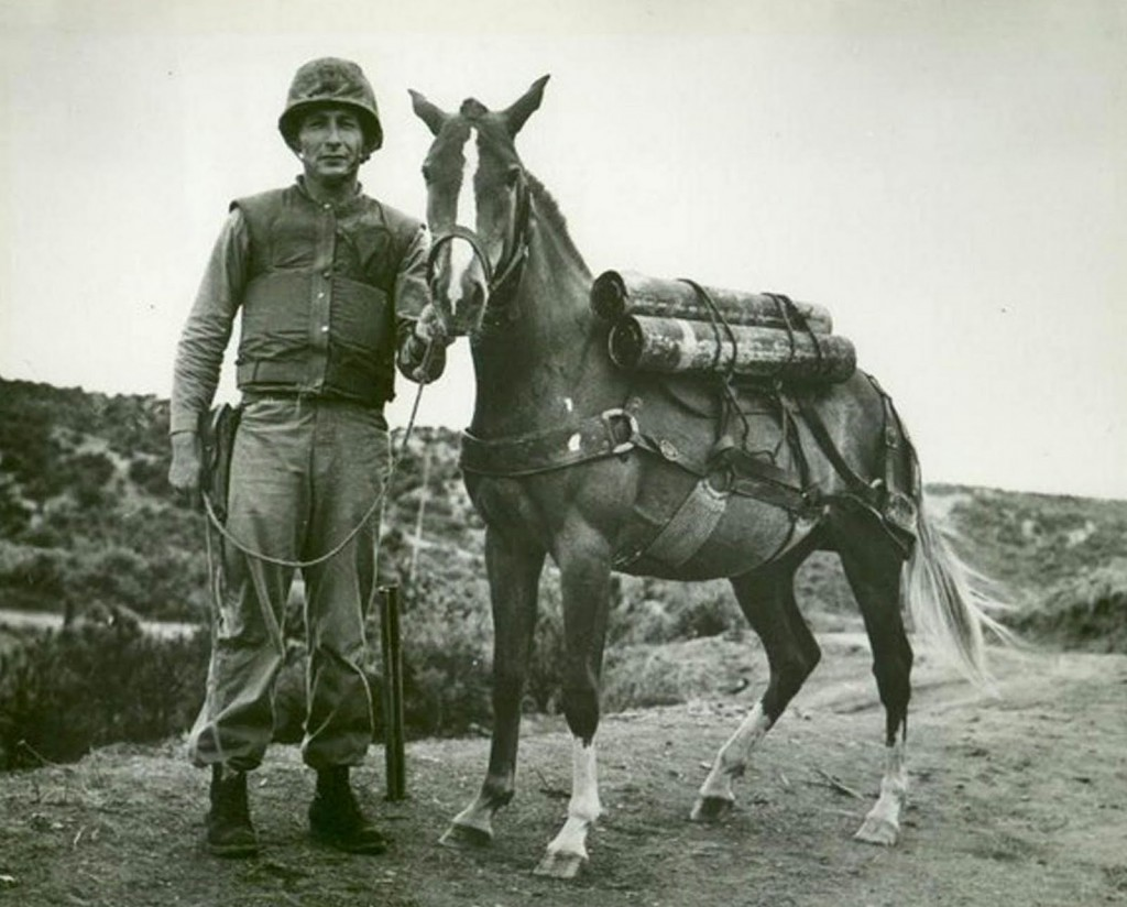 Sgt Reckless Sgt Joe Latham MCRD, SDMHS 2 of 4